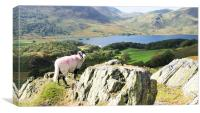 Sheep Over Crummock Water, Canvas Print