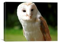 Barn Owle, Canvas Print