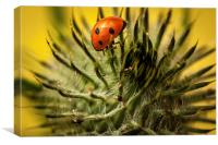 Ladybird and Thistle., Canvas Print