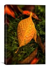 Autumn Leaf After Rain., Canvas Print