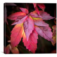 Red Leaves., Canvas Print