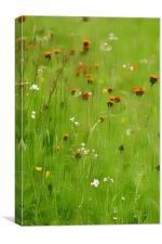 Summer Wild Flower Meadow, Canvas Print