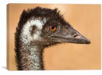 Wild Emu portrait Australia, Canvas Print