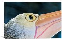 Australian Pelican Macro portrait, Canvas Print