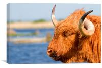 Highland Cattle in Oare Marshes, Kent, Canvas Print