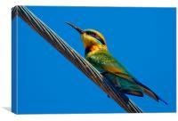Bird on a wire (Rainbow Bee eater) Queensland Aus, Canvas Print