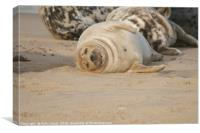 Sleepy Seal, Canvas Print