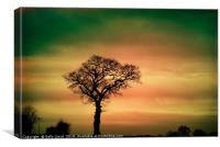 Tree Silhouette against the sky, Canvas Print
