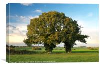 Two Trunk Tree, Canvas Print