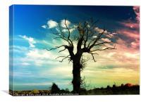 The Lightning Tree, Canvas Print