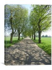 Tree Avenue - Park Life, Canvas Print