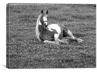 Horse lying down in black and white, Canvas Print