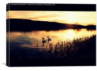 Two swans in the evening on the Forth and Clyde C, Canvas Print