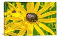 Bright yellow Goldsturm flower, Canvas Print