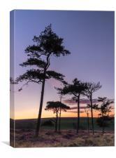 Sunset Copse, Canvas Print