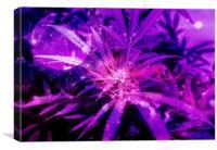 Purple Fantasy Bud, Canvas Print