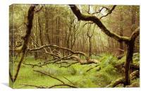 Glendalough Wood, Canvas Print