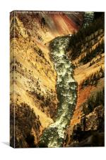 Looking down the Grand Canyon of Yellowstone, Yel, Canvas Print