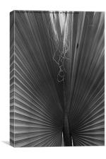Palm Leaf, Jardin Marjorelle, Marrakech, Canvas Print