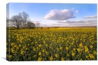 Fenland Field., Canvas Print