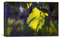 Evening Vine Leaf, Canvas Print