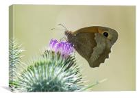 Small Heath Butterfly, Canvas Print
