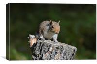 Cheeky Squirrel, Canvas Print