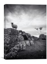 Sheep in mono, Canvas Print
