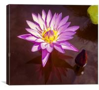 Stunning Water Lily, Canvas Print