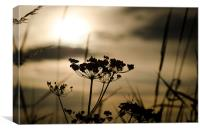 Sunlight Silhouettes, Canvas Print