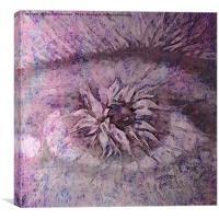 The Eye of Apollo Purple, Canvas Print