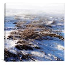 New Snow, Canvas Print