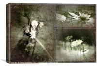 Synced Belles Photography 2012, Canvas Print