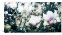 Magnolia Bearing, Canvas Print