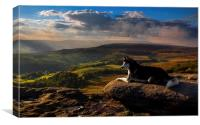 Everything the light touches, Canvas Print