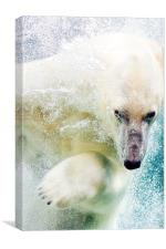 Polar Bear, Canvas Print