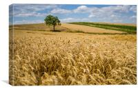 Wheat and A Tree, Canvas Print