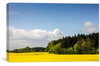 Rape Seed Field and Forest, Canvas Print