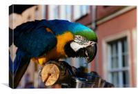 Blue Macaw, Canvas Print