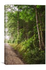 Sunlight Forest, Canvas Print