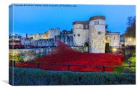 Poppy flowers at the Tower of London, Canvas Print