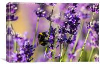 Bee on Lavender, Canvas Print