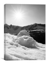 Spring Snow in Black and White, Canvas Print