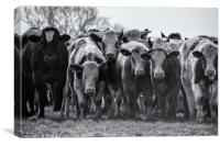 Cattle, Canvas Print