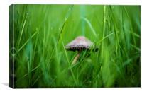 Not Mushroom, Canvas Print