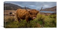 Highland Grazing, Canvas Print