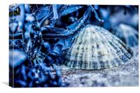 Limpet shell bathed in blue, Canvas Print