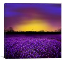 Golden Hour - Purple Floral Field and Dramatic Sky, Canvas Print