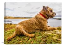 Border Terrier In Digital Oils. Print, Canvas Print