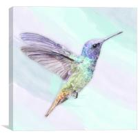 Hummingbird In Watercolors, On A Watercolor Blend , Canvas Print